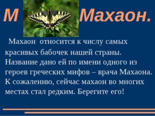 Махаон  относится к числу самых красивых бабочек нашей страны. Название дано