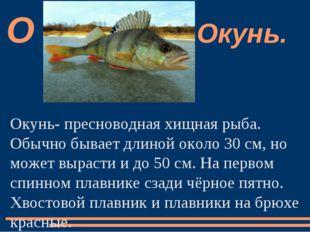Окунь- пресноводная хищная рыба. Обычно бывает длиной около 30 см, но может в