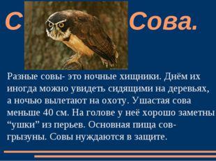 Разные совы- это ночные хищники. Днём их иногда можно увидеть сидящими на дер