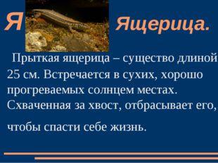 Прыткая ящерица – существо длиной 25 см. Встречается в сухих, хорошо прогрева