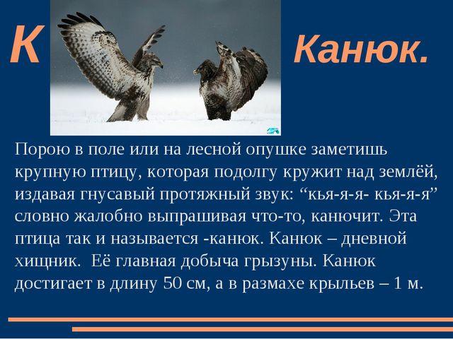Порою в поле или на лесной опушке заметишь крупную птицу, которая подолгу кру...