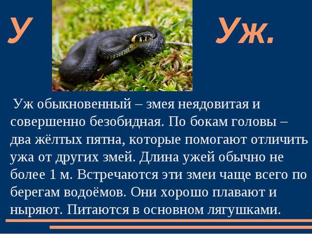Уж обыкновенный – змея неядовитая и совершенно безобидная. По бокам головы –...