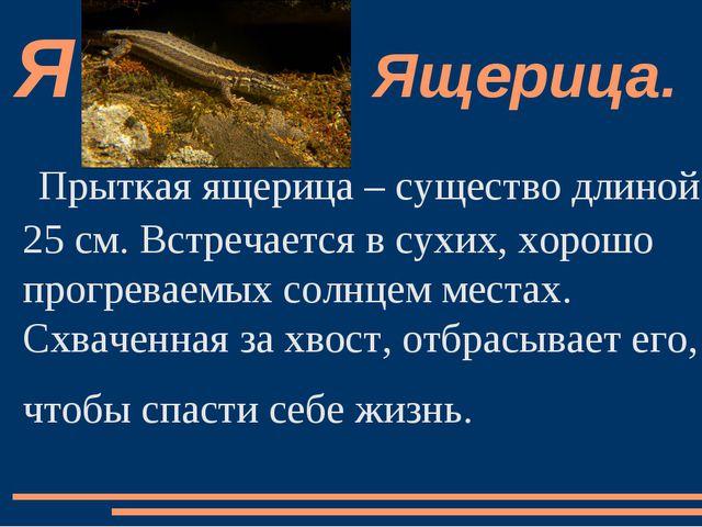 Прыткая ящерица – существо длиной 25 см. Встречается в сухих, хорошо прогрева...