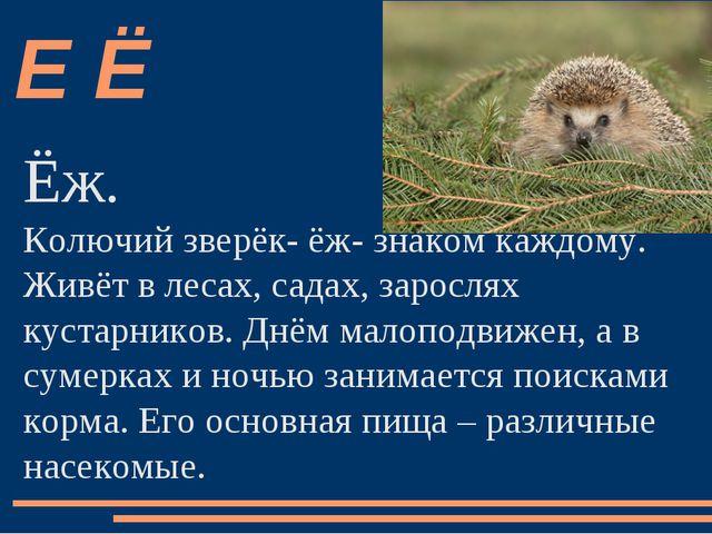 Ёж. Ёж. Колючий зверёк- ёж- знаком каждому. Живёт в лесах, садах, зарослях...