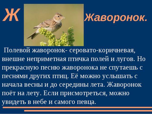 Полевой жаворонок- серовато-коричневая, внешне неприметная птичка полей и луг...