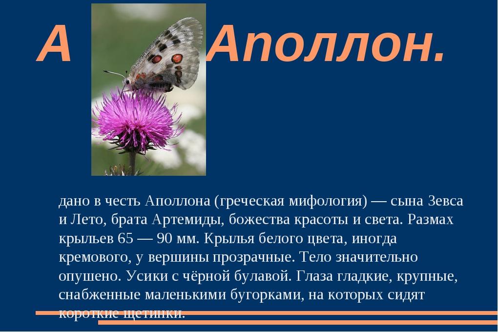 Аполло́н — дневная бабочка семейства Парусники. Название дано в честь Аполлон...
