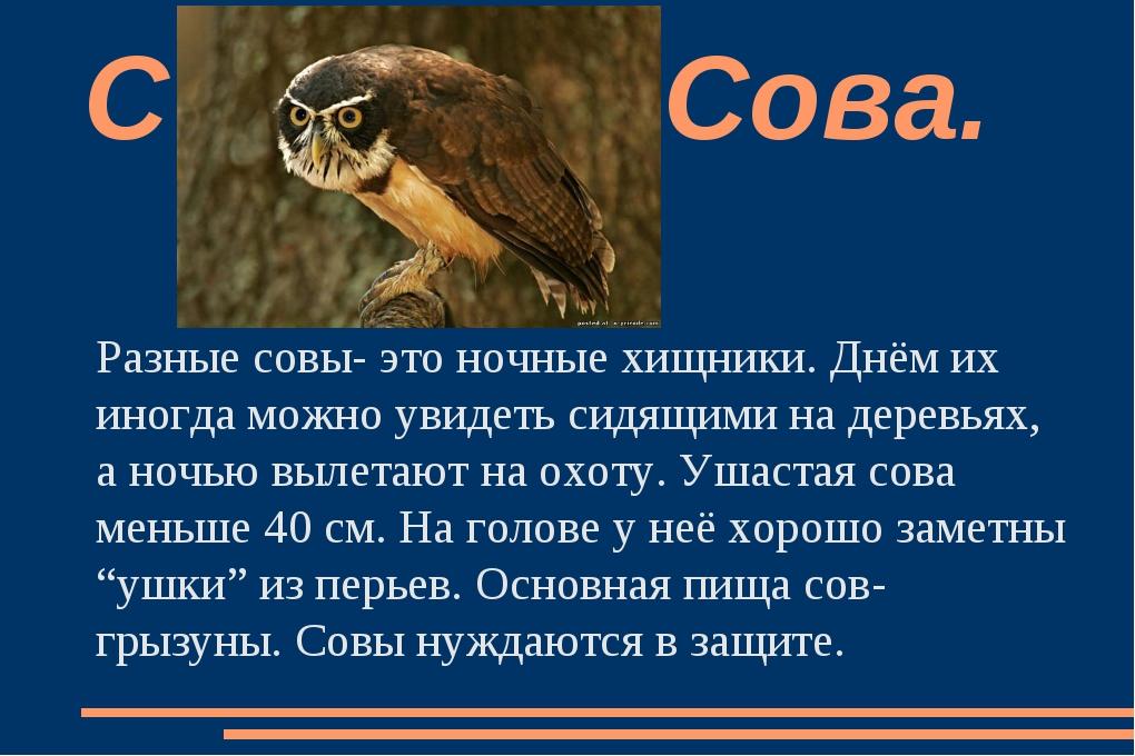 Разные совы- это ночные хищники. Днём их иногда можно увидеть сидящими на дер...