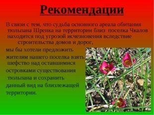В связи с тем, что судьба основного ареала обитания тюльпана Шренка на терри