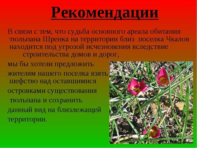 В связи с тем, что судьба основного ареала обитания тюльпана Шренка на терри...