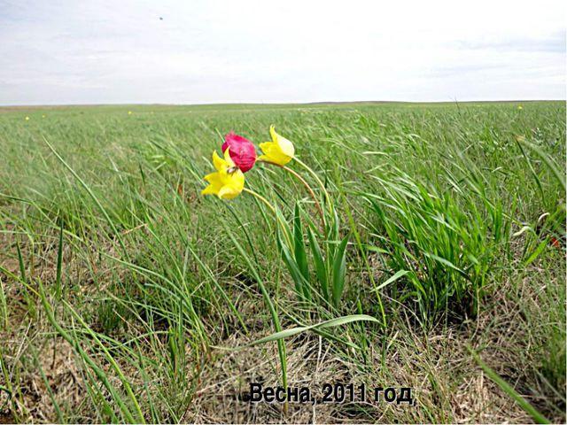 Весна, 2011 год