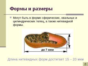 Формы и размеры Могут быть в форме сферических, овальных и цилиндрических тел