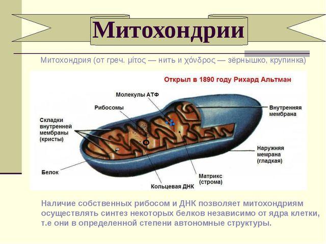 Митохондрии Наличие собственных рибосом и ДНК позволяет митохондриям осуществ...