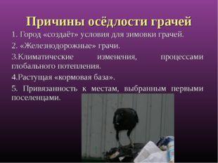 Причины осёдлости грачей 1. Город «создаёт» условия для зимовки грачей. 2. «Ж
