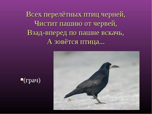 Всех перелётных птиц черней, Чистит пашню от червей, Взад-вперед по пашне в...