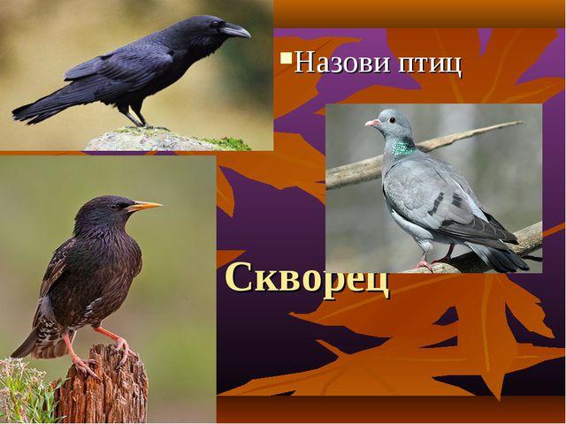 Скворец Назови птиц