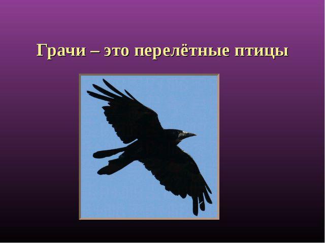 Грачи – это перелётные птицы