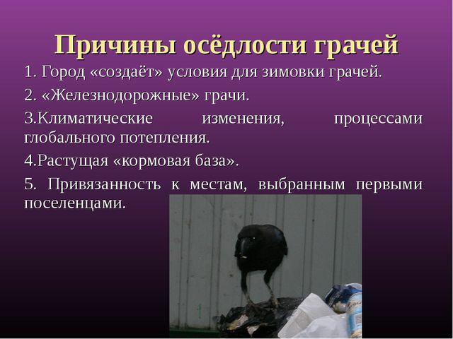 Причины осёдлости грачей 1. Город «создаёт» условия для зимовки грачей. 2. «Ж...