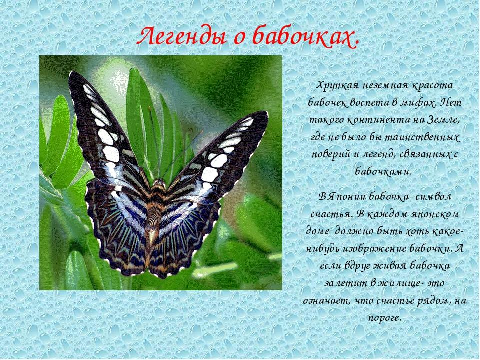 Стихи про бабочку с картинками