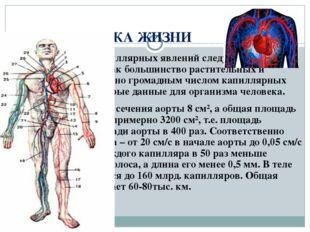 ФИЗИКА ЖИЗНИ При рассмотрении капиллярных явлений следует подчеркнуть их роль