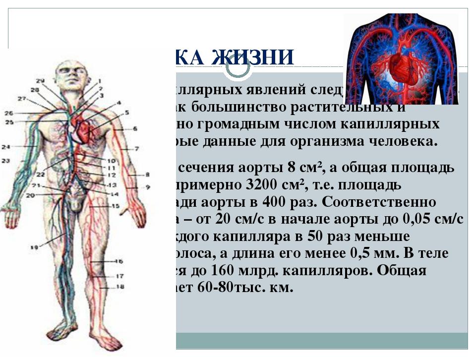ФИЗИКА ЖИЗНИ При рассмотрении капиллярных явлений следует подчеркнуть их роль...