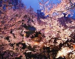 D:\Ирина\япония мхк\цветущий дворцовый сад в мае.jpg