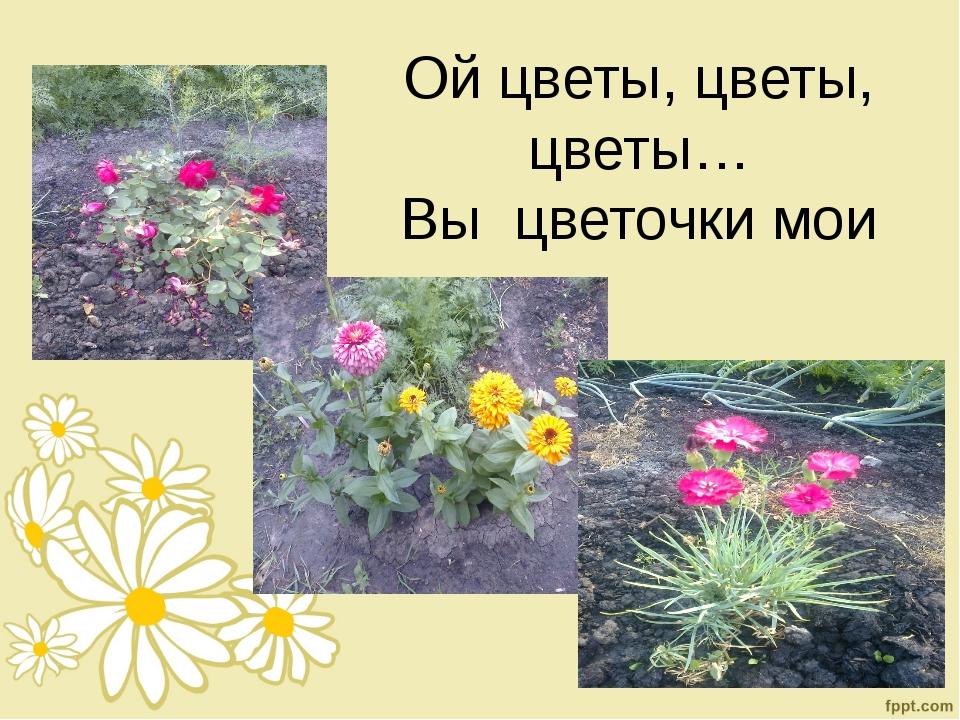 Ой цветы, цветы, цветы… Вы цветочки мои