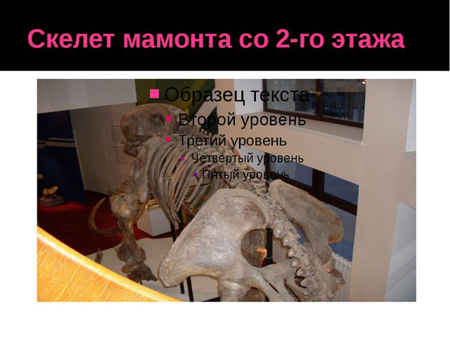 Скелет мамонта со 2-го этажа