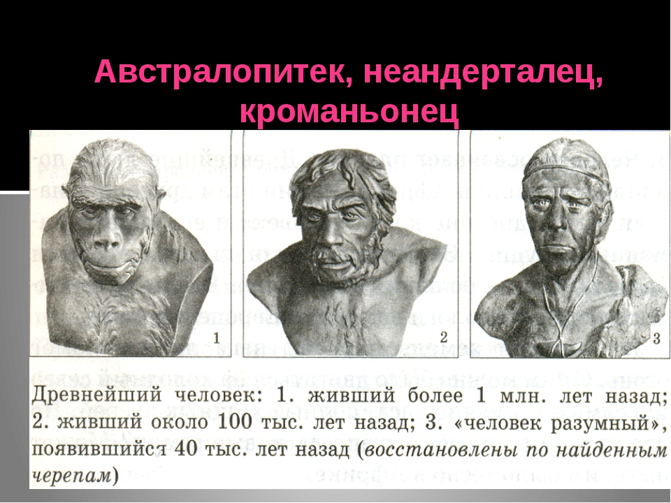 Австралопитек, неандерталец, кроманьонец