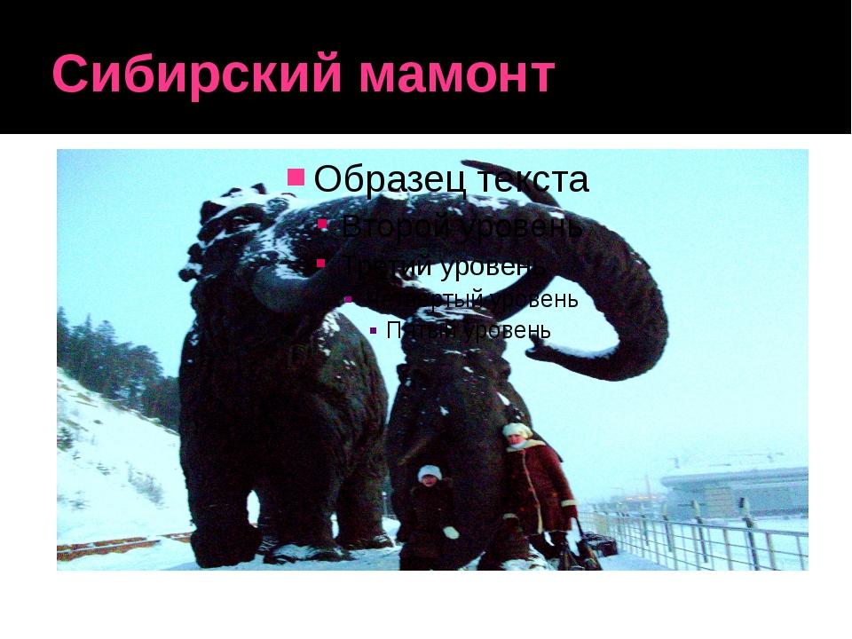 Сибирский мамонт