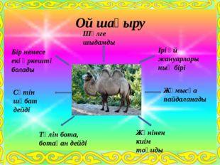 Ірі үй жануарлары ның бірі Бір немесе екі өркешті болады Шөлге шыдамды Сүтін