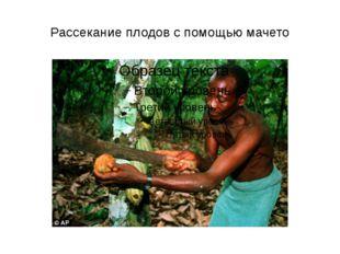 Рассекание плодов с помощью мачето