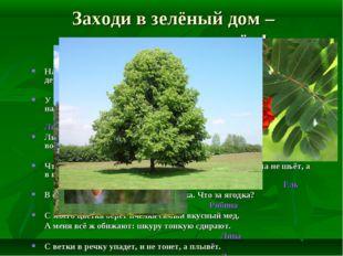 Заходи в зелёный дом – чудеса увидишь в нём! Назовите самое любимое, родное