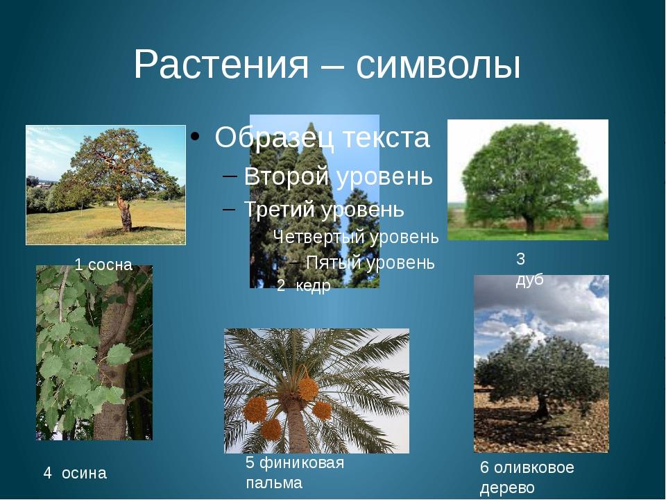 Растения – символы 1 сосна 2 кедр 3 дуб 4 осина 5 финиковая пальма 6 оливково...