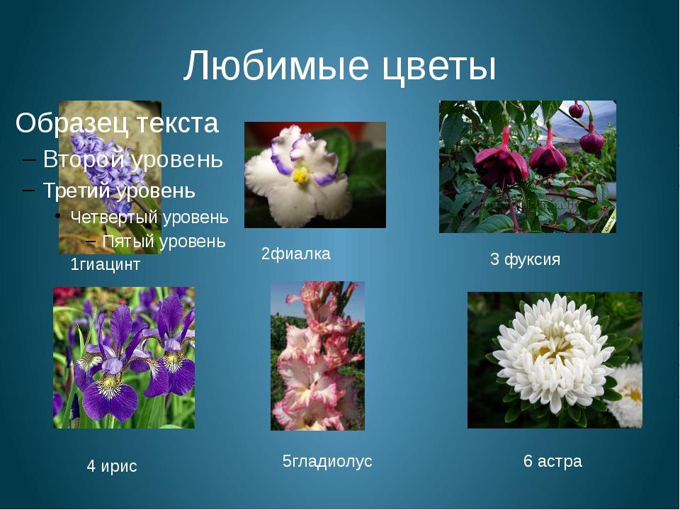 Любимые цветы 1гиацинт 2фиалка 3 фуксия 4 ирис 5гладиолус 6 астра