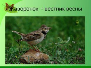 Жаворонок - вестник весны