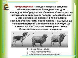 Архаромеринос - порода тонкорунных овец мясо-шёрстного направления. Выведена