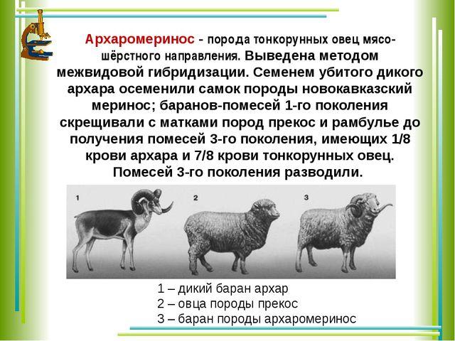 Архаромеринос - порода тонкорунных овец мясо-шёрстного направления. Выведена...