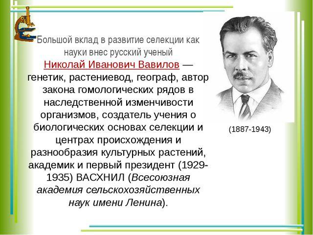 Большой вклад в развитие селекции как науки внес русский ученый Николай Ивано...
