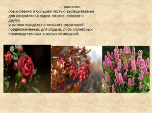 Декорати́вные расте́ния— растения, обыкновенно и большей частью выращиваемые