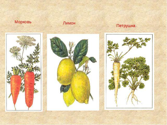 Морковь Лимон Петрушка