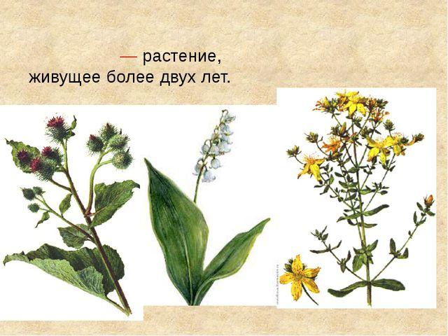Многоле́тнее расте́ние—растение, живущее более двух лет.