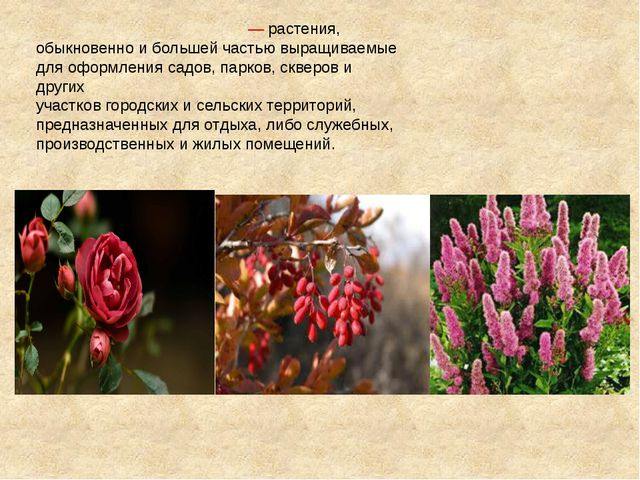 Декорати́вные расте́ния— растения, обыкновенно и большей частью выращиваемые...