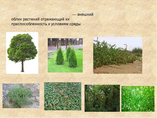 Жи́зненная фо́рма расте́ний— внешний облик растений отражающий их приспособл...
