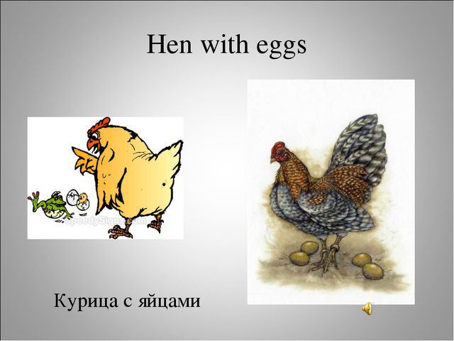 Hen with eggs Курица с яйцами