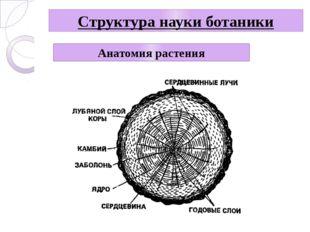 Структура науки ботаники Анатомия растения
