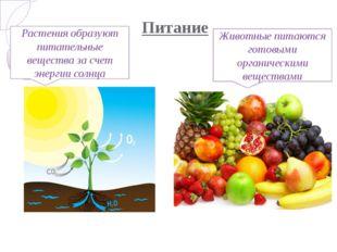 Питание Растения образуют питательные вещества за счет энергии солнца Животны