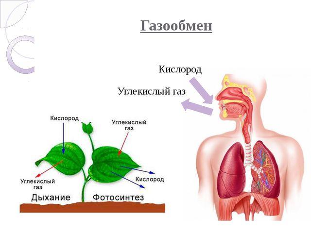 Газообмен Кислород Углекислый газ