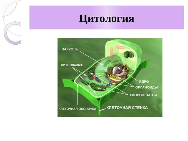 Цитология