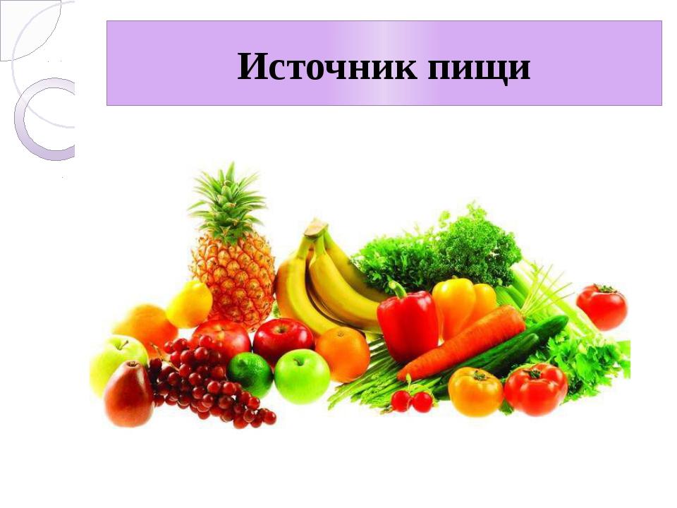 Источник пищи