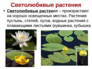 Светолюбивые растения Светолюбивые растения – произрастают на хорошо освещенн